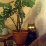 Моя кошка Маша