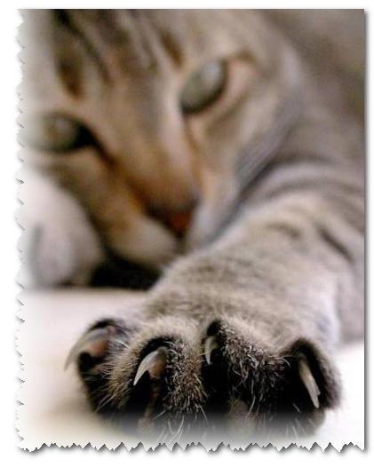 Стрижка когтей у кошек