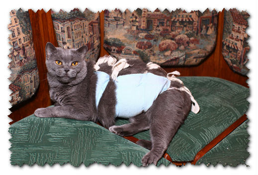 Стерилизация кошек,уход