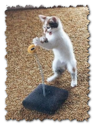 Игрушки для котят своими руками фото