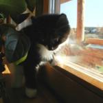 Котенок ловит муху