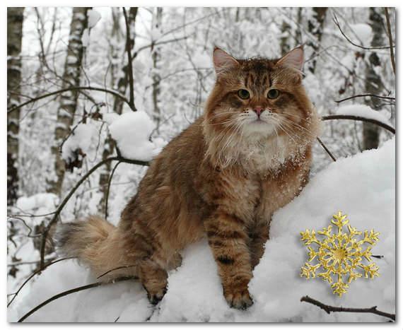 Зимние кошки