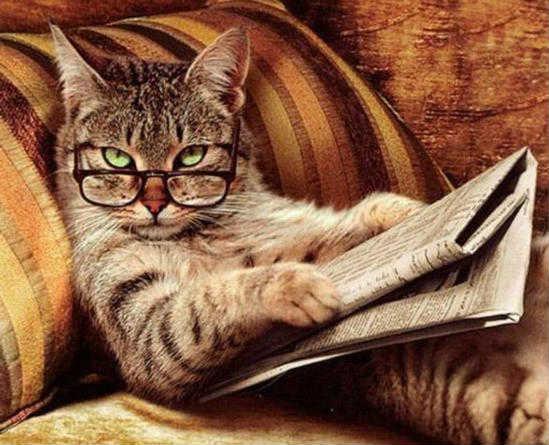 Домашние кошки и какой возраст кошки