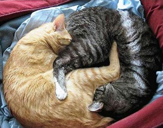Кошки и фэн - шуй