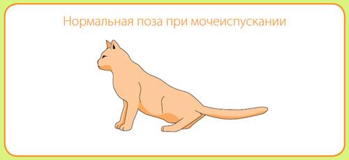 МКБ у кошек