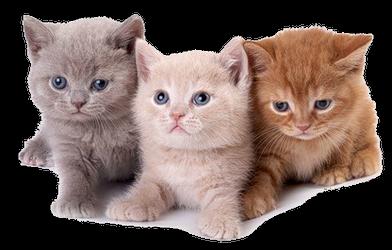 кошки.png