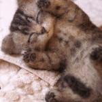 котенок из шерсти фото