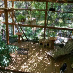 зона отдыха для кошек на даче
