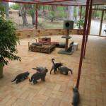 веранда для кошек