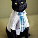 рубашка для кота