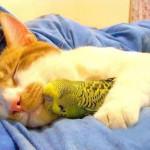 кошка и попугайчик фото