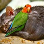 кошка с попугаем фото