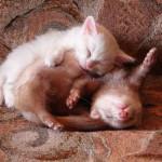 котенок и хорек фото