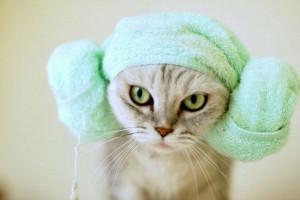 полотенце на голове кошки