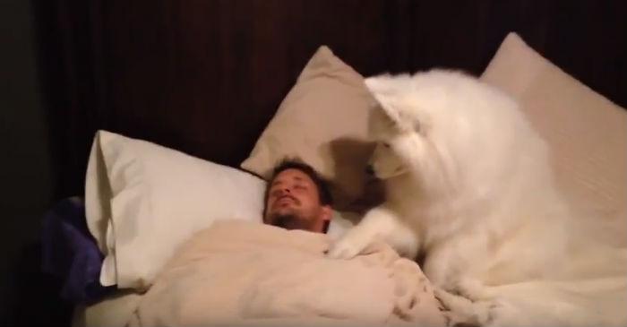 собака будит человека фото