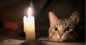 магия кошек 1