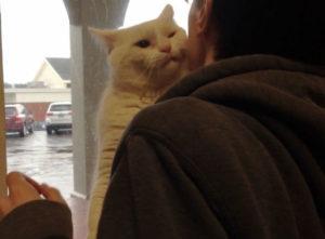 белый кот фото 2