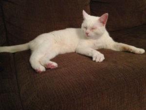 белый кот фото 5