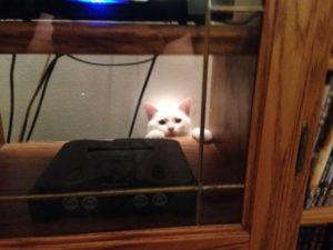 белый кот фото 6
