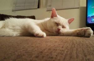 белый кот фото 7