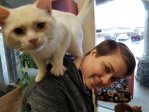 белый кот фото 8