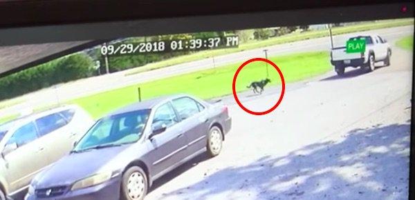 собака бежит за машиной фото