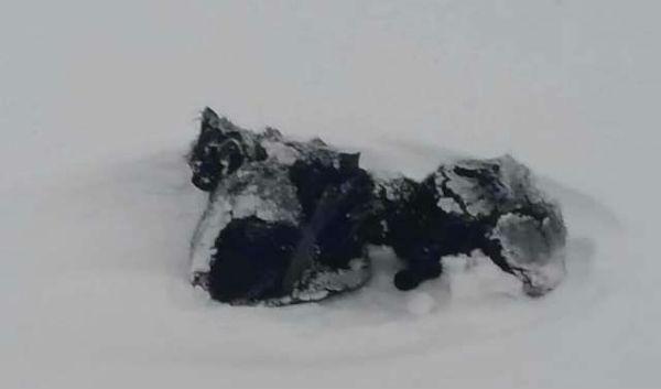 котята в снегу фото 1