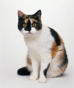 какая кошка подходит по зодиаку фото 2