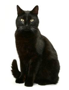 какая кошка подходит по зодиаку фото 5