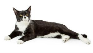 какая кошка подходит по зодиаку фото 6
