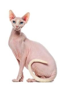 какая кошка подходит по зодиаку фото 7