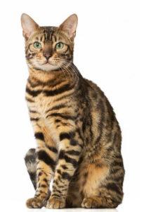 какая кошка подходит по зодиаку фото 8