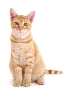 какая кошка подходит по зодиаку фото 9