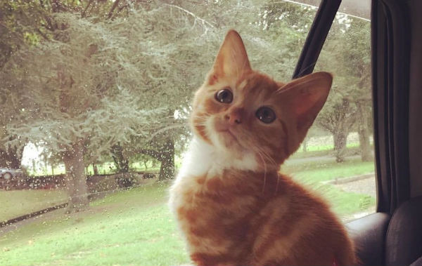 рыжий котенок 1