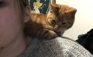 рыжий котенок 11