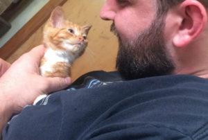 рыжий котенок 3