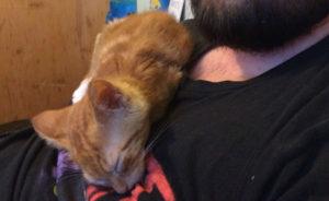 рыжий котенок 4