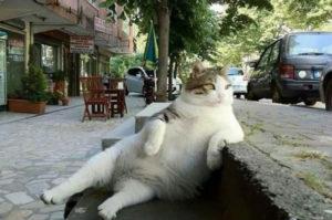 памятник коту Томбили фото 2