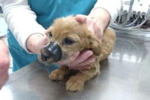спасение щенка фото 3