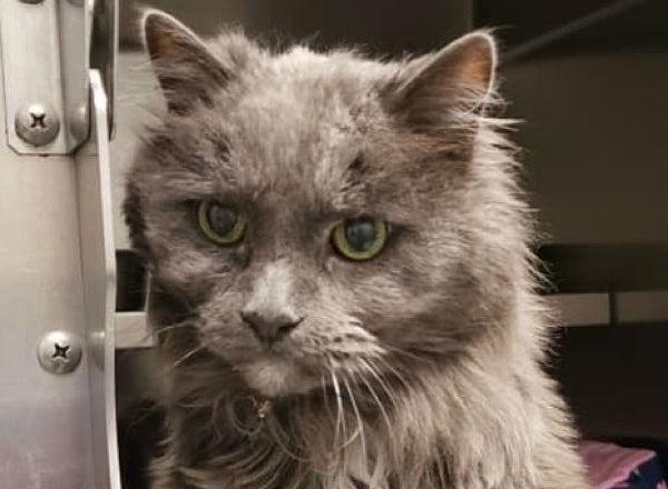 старый кот фото 1