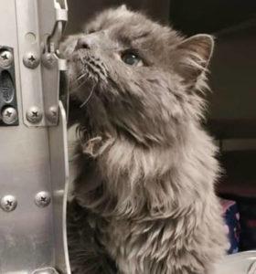 старый кот фото 3