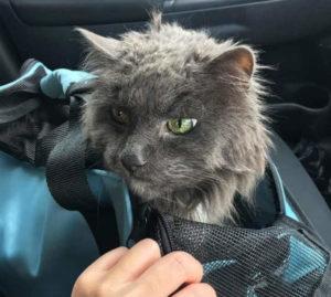 старый кот фото 4