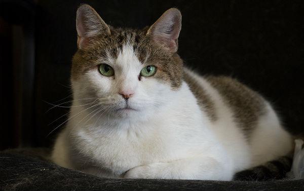 Лабораторная кошка фото 1