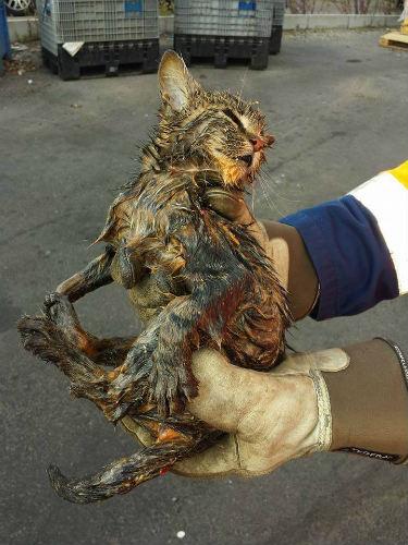 спасение котенка 4