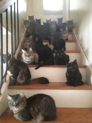 много кошек фото 2