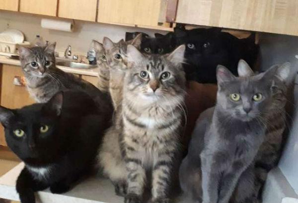 много кошек фото 1
