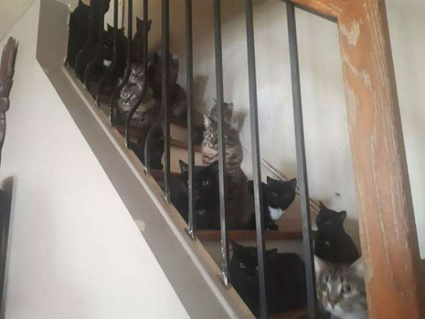 много кошек фото 3