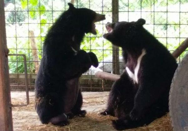 у медведя опух язык 5