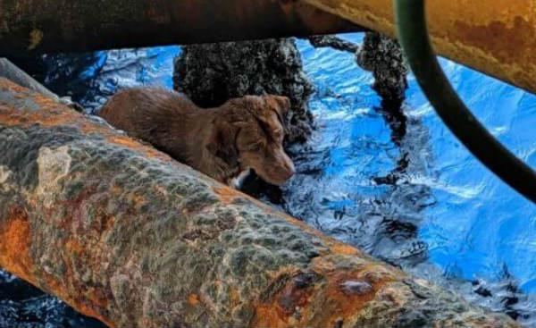 собака в океане 1