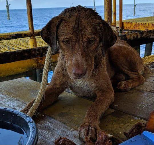 собака в океане 2